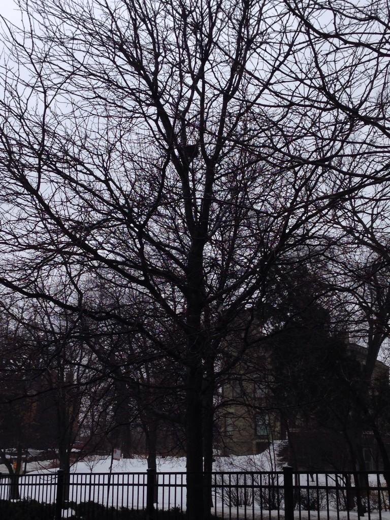 Overcast (February 2014)